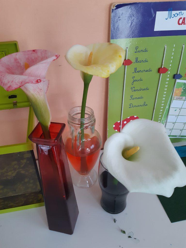 fleurs colorées de Stanislas